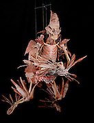 Gunther von Hagens' Bodyworlds exhibit. Body Worlds is a traveling exhibit of real, plastinated human bodies and body parts. Von Hagens invented plastination as a way to preserve body tissue and is the creator of the Body Worlds exhibits..