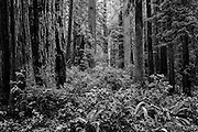 Landscape photographs from Redwood National Park, CA