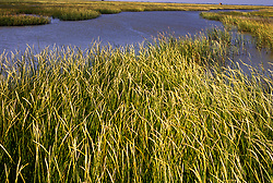 Reeds growing on a tiny island in the Gulf Coast