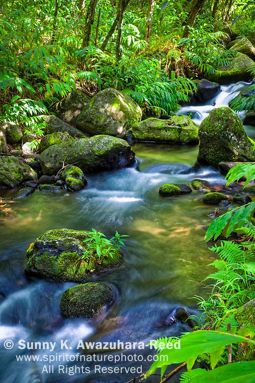 Kalalau Stream cascades down through tropical rainforest, Kalalau Valley, Na Pali Coast State Park, Kauai, Hawaii. Vertical image.