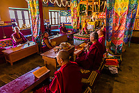Buddhist monks of the Yellow Hat sect praying at the Diskit Monastery, Nubra Valley, Ladakh, Jammu and Kashmir State, India.