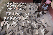 Shark fins commercial catch<br /> Punto Barrios<br /> Guatemala<br /> Central America