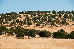 Oak woodlands landscape near Don Pedro Lake, at Tulloch Lake turnoff, California, USA.  Photo copyright Lee Foster.  Photo # california120609.