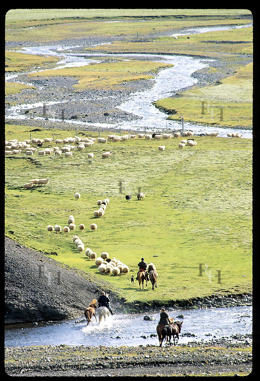 Sheep hurry along corral fence in mntns as horsemen ford stream during fall roundup; Klaustur. Iceland