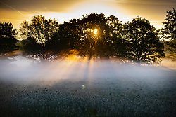 © Licensed to London News Pictures. 20/05/2020. London, UK. The sun rises over misty fields near Oxshott in Surrey. The government has announced a series of measures to slowly ease lockdown, which was introduced to fight the spread of the COVID-19 strain of coronavirus. Photo credit: Peter Macdiarmid/LNP