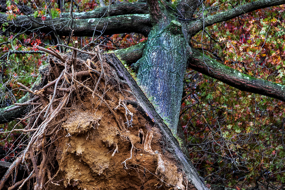 Hurricane Sandy tree damage, New Jersey, USA