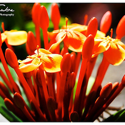 flowers and plant photography by Jaydon cabe Flowers and Plants Photography by Jaydon Cabe