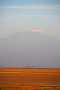 Mount Kilimanjaro, the tallest free standing mountain in the world, rising above an orange plain,, Tanzania, Africa