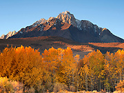 Aspen and Mount Morrison, Eastern Sierra Nevada, Inyo National forest, California