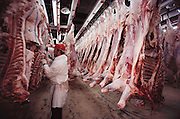 The Harris Ranch slaughterhouse, the Harris Beef Company, in Selma, California kills more than 700 head of cattle a day. Beef carcasses are cooled in a huge refrigerated room. A worker in a red hardhat trims beef. USA [[From the company: THE HARRIS FARMS GROUP OF COMPANIES. Harris Farms, Inc. is one of the nation's largest, vertically integrated family owned agribusinesses]].