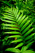 Monteverde Forest Preserve, - Costa Rica filled with green foliage including ferns an leaves.