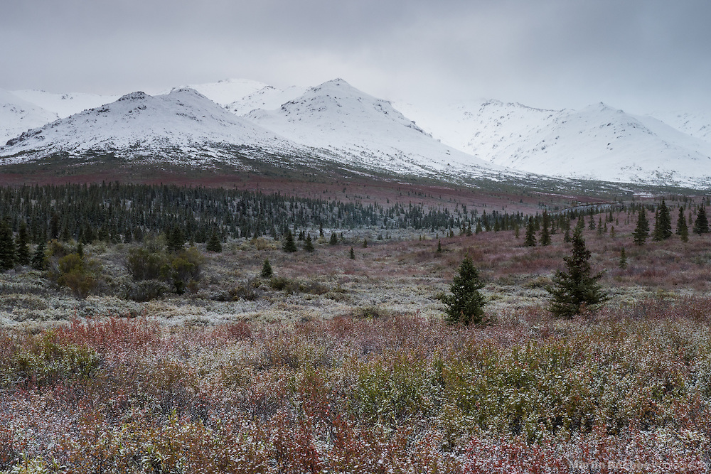 Morning mist on the mountains of Primrose Ridge, Denali National Park, Alaska