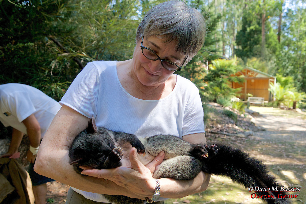 Jeannette Franks Holding Mountain Brushtail Possum