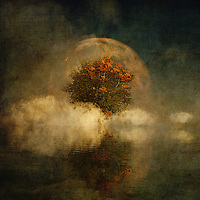 There is something truly unique to this fine art piece from Jan Keteleer. We see a strange blend of images, including a moon. We see a haze of the autumn season covering everything. There is something about this piece that evokes the places we visit in our dreams. There is no question that this piece can also connect us to images and memories that dominated our childhoods. You will love the fact that this piece can work in just about any space you can imagine. It is ideal for anyone who prides themselves on having truly unique taste, when it comes to singular examples of art. <br /> <br /> BUY THIS PRINT AT<br /> <br /> FINE ART AMERICA<br /> ENGLISH<br /> https://janke.pixels.com/featured/full-moon-over-misty-water-jan-keteleer.html<br /> <br /> WADM / OH MY PRINTS<br /> DUTCH / FRENCH / GERMAN<br /> https://www.werkaandemuur.nl/nl/shopwerk/Droomlandschap---Volle-maan-met-een-Amerikaanse-beuk-in-de-mist/434781/134