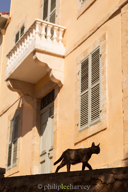 Silhouette of cat walking by building, Paphos, Cyprus