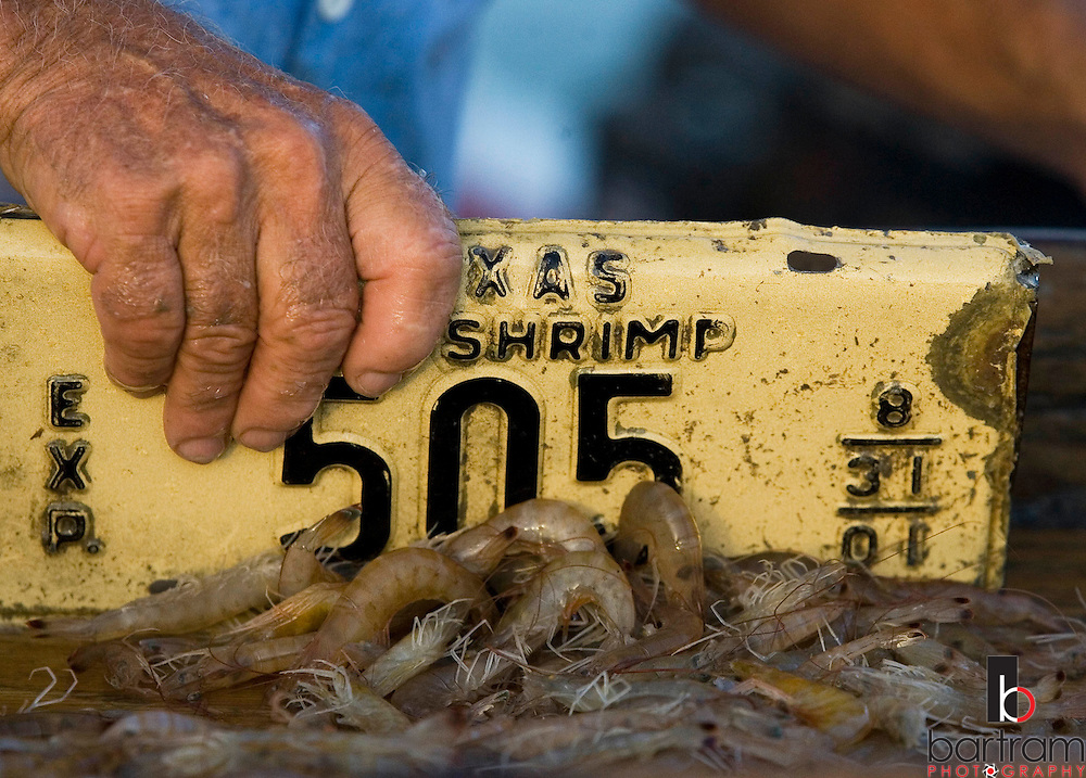 KEVIN BARTRAM/The Daily News.Shrimper Jerome Kunz uses an old shrimp license plate to sort his catch aboard his boat the St. Vincent on Wednesday, July 12, 2006. .
