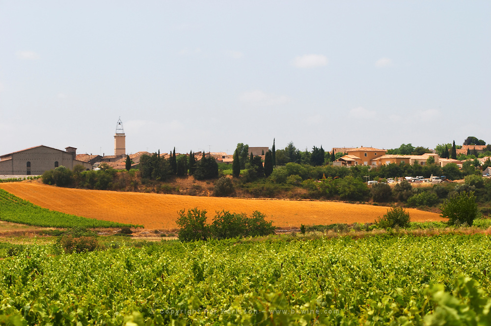 Domaine d'Aupilhac. Montpeyroux. Languedoc. France. Europe. Vineyard.
