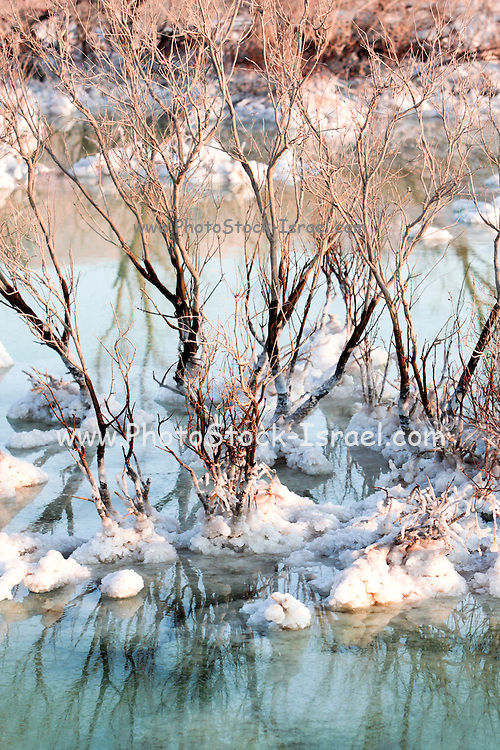Israel, Dead Sea salt formation caused by the evaporation of the water clinking to dead bushes .