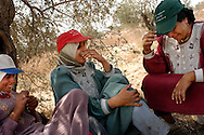 Members of the Toumeh family,take a break while harvesting olives near the northern West Bank town of Qaffin, Wednesday, November 5, 2003. Due to the placement of the Israeli Security Fence, the Tomi family has to acquire a permit to get to this portion of their olive trees...Photo by Erin Lubin