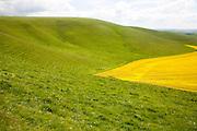 Chalk scarp slope near Allington, Wiltshire, England