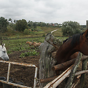 Horses at the estate of Lev Tolstoy in Yasnaya Polyana, Russia.