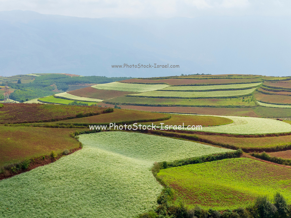 Honghe Hani Rice Terraces is the terrace located in the Honghe Prefecture, Yuanyang County, Yunnan, China. It is a world heritage site and the crops are mainly cultivated by the Hani and Yi ethnic minorities.