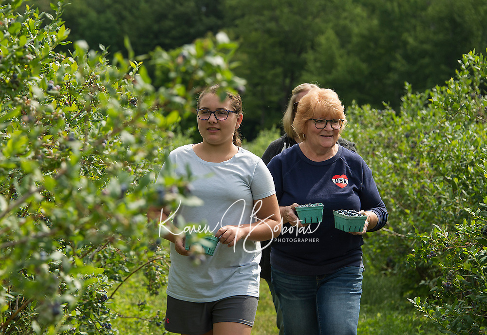 Hailey Cullen, Pam Murphy and Sarah Cullen pick blueberries at Stone Brook Farm in Gilford over the weekend.    (Karen Bobotas/for the Laconia Daily Sun)