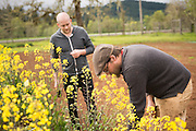Chef Timothy Wastell (L) and Breeder Andrew Still (R) performing kale selections