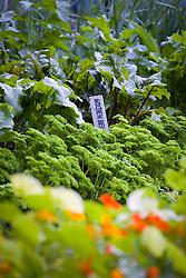 Beetroot label in the vegetable garden