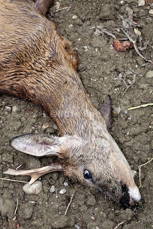 head of a dead deer