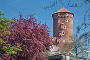 Baszta Sandomierska na Zamku Królewskim na Wawelu, Kraków, Polska<br /> Sandomierz Tower at the Wawel Royal Castle, Cracow, Poland