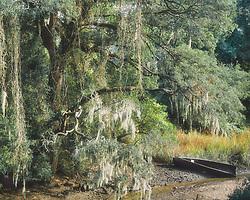 254 Bayou Country ©1997 JD Marston