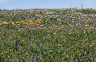 Wildflowers near Fabrichny, Kazakhstan