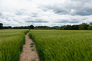 English landscape of agricultural barley fields near Martley, England, United Kingdom.
