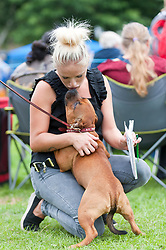 © Licensed to London News Pictures. 18/08/2018. Llanelwedd, Powys, UK.  A Staffordshire Bull Terrier gets some affection before the event on the second day of The Welsh Kennel Club Dog Show, held at the Royal Welsh Showground, Llanelwedd in Powys, Wales, UK. Photo credit: Graham M. Lawrence/LNP