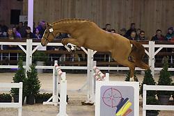 010 - Marlon vd Heffinck<br /> Hengstenkeuring BWP - Azelhof - Koningshooikt 2015<br /> ©  Dirk Caremans