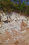 Chablis: A cross section of the soil on the grand cru vineyard hill: a thin topsoil and then Kimmeridge - limestone and clay