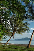 Palm trees, Kokopo Beach Bungalo Resort,  East New Britain, Papua New Guinea