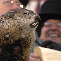 """PUNXSUTAWNEY, PA - FEBRUARY 2: Punxsutawney Phil the weather forecasting groundhog is presented to the crowd at Gobbler's Knob February 2, 2004 during the annual Groundhog Day event in Punxsutawney, Pennsylvania. President of the Groundhog Club reads the scroll where Punxsutawney Phil proclaims """" my shadow I see six more weeks of winter there will be. <br />.  (Photo by Archie Carpenter/Getty Images)"""
