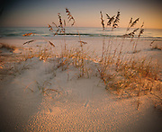 Beach grasses stick out of sand dunes lining the ocean on the southeastern coast