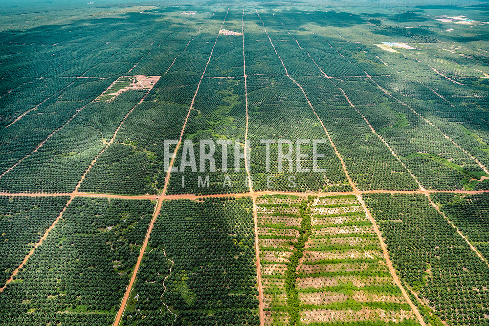 Illegal forest clearing, making way for palm oil expansion. Papua, Indonesia
