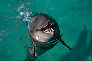 Dominican Republic dolphin