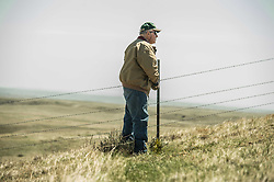 "Bud Walsh works with The Nature Conservancy on his land in Eastern Montana across from the Matador ""grass Bank"" on May 9, 2013. The ""grass bank"" is an innovative way to leverage conservation gains, in which ranchers can graze their cattle at discounted rates on Conservancy land in exchange for improving conservation practices on their own ""home"" ranches. In 2002, the <br /> Conservancy began leasing parts of the ranch to neighboring ranchers who were suffering from several years of severe drought essentially offering the Matador's grass to neighboring ranches in exchange for their  participation in conservation efforts. Thirteen ranchers graze their cattle on the Matador and the grassbank has enabled TNC to leverage conservation on more than 225,000 additional acres of private land without the cost of purchase of the land or of easements. The grassbank has helped keep ranchers from ""busting sod,"" or  plowing up native grassland to farm it; helped remove obstacles to pronghorn antelope migration; improved habitat for the Greater Sage-Grouse and reduced the risk of Sage-Grouse colliding with fences; preserved prairie dog towns (thereby preserving an important food source for the endangered black-footed ferret) and prevented the spread of noxious weeds. (Photo By Ami Vitale)"