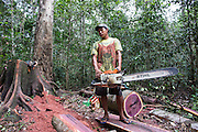 In this Amerindian community forest management project, the village council decides how and how much logging do in the forest area where they have title land. In these images, they decided to cut 4 trees for building a football field's dais and a house's renovation (North Rupununi).