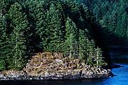 Coastal spruce forest, British Columbia, Canada