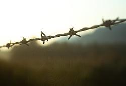 THEMENBILD - ein Spinnennetz an einem Zaun, aufgenommen am 05. August 2018, Kaprun, Österreich // a spider web on a fence on 2018/08/05, Kaprun, Austria. EXPA Pictures © 2018, PhotoCredit: EXPA/ Stefanie Oberhauser