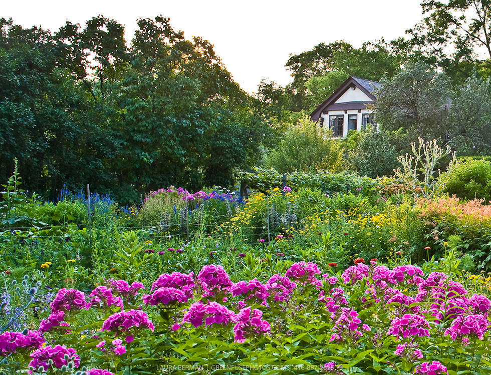 Lush, mid-summer perennial flower garden.