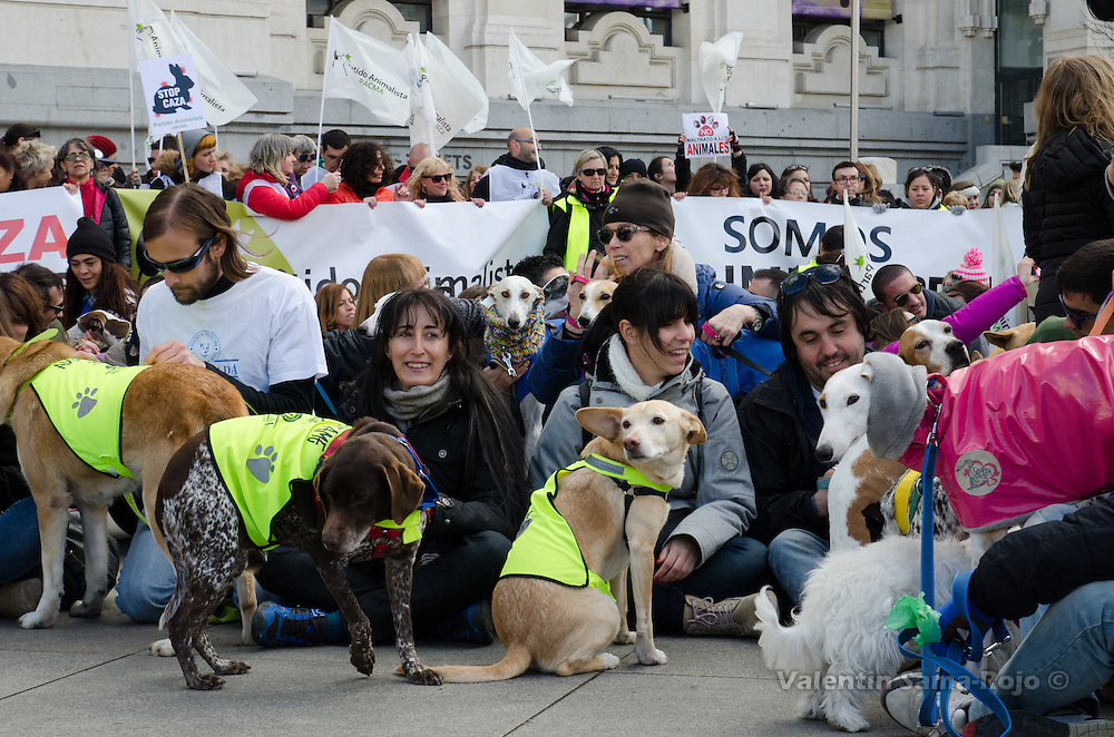 Madrid, Spain. 7th Feb, 2016. Demonstrators gathered at Madrid City Hall to protest against hunting using dogs during the demonstration held in Madrid.