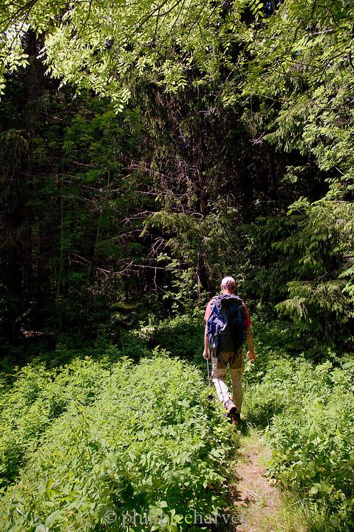 A man hiking in the forest near Col de la Faucille, Jura region, France