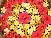 Floating flower petals in Trivandrum (Thiruvananthapuram), Kerala, India